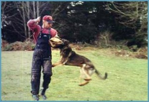 dog training for protection
