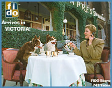 train dogs to appear in print advertising